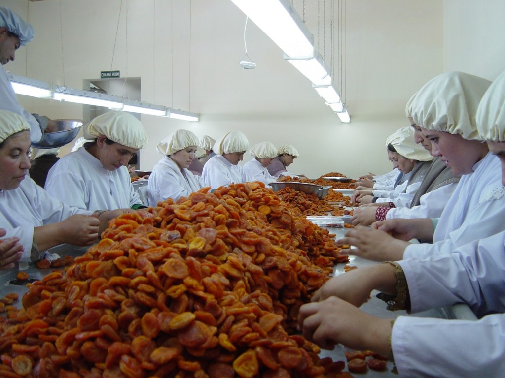 Dried apricot processing