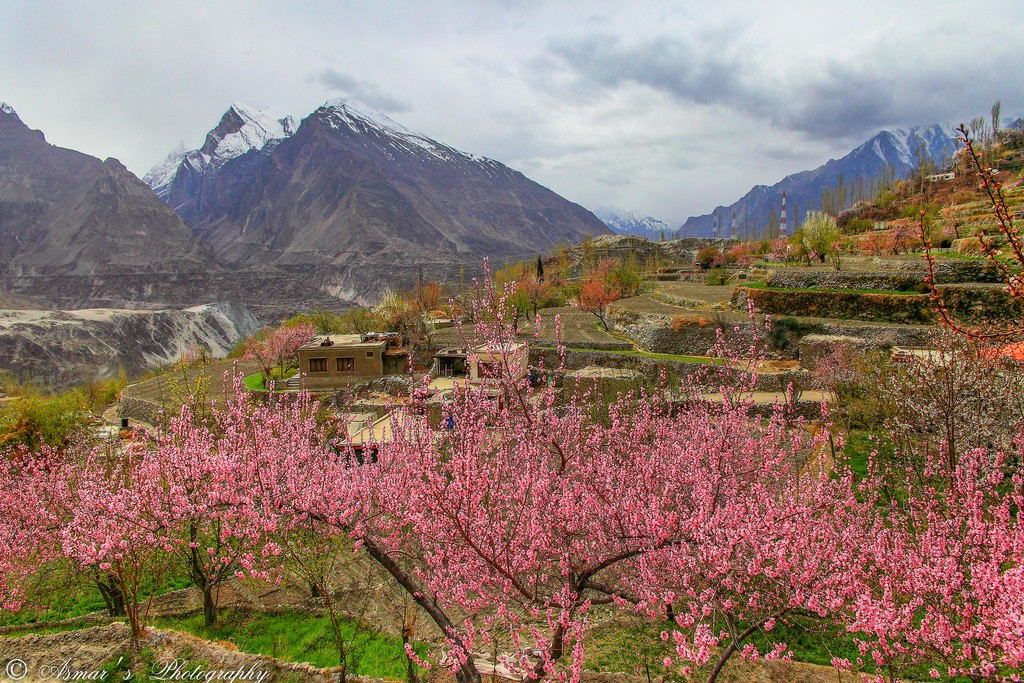 Spring season in Hunza